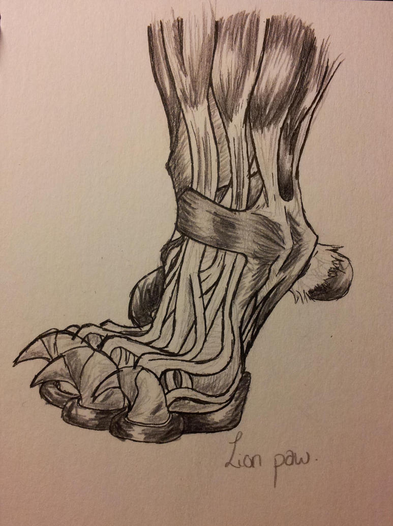 Lion Anatomy - Paw Muscle/Tendons by DigitalWolfCreations on DeviantArt