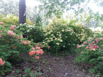 GardenGarde23 by moonrosy