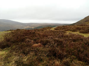 Green hills2