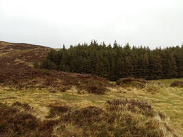 Green hills3