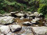 Summer river1