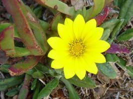 yellow by Nagila