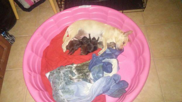 pups again