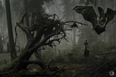 lost in a gloomy forest