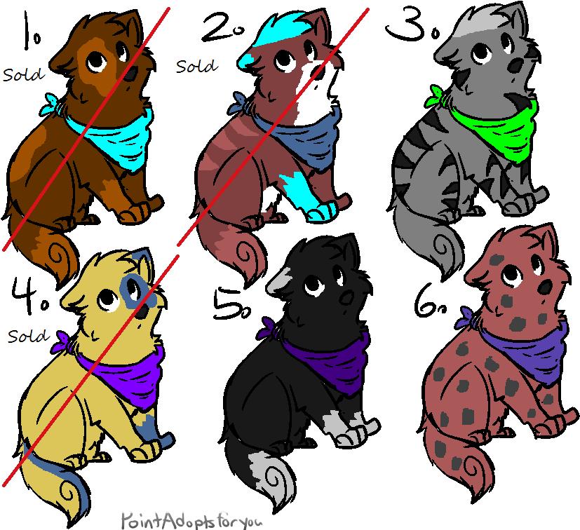 5 Point Puppy Adoptables