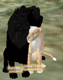 BlackMoon (my feralheart character) has a mate :D