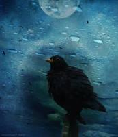 birdsong by HippieVan57