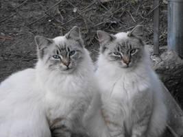 kitty love by HippieVan57