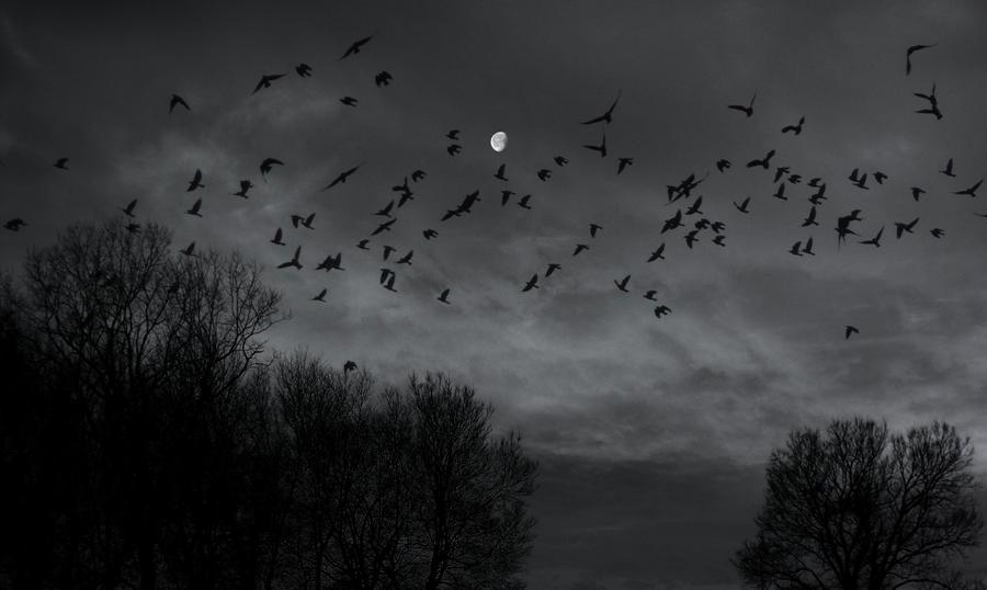 moonage daydream by HippieVan57