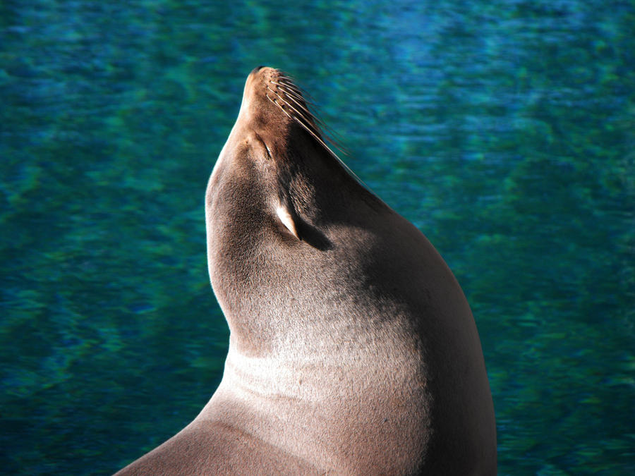 Sea Lion by HippieVan57