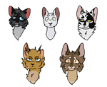 Beautiful cats - THL