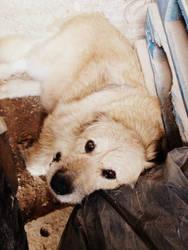 Old dog by liola1122