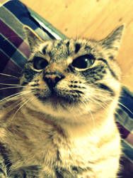funny cute cat by liola1122
