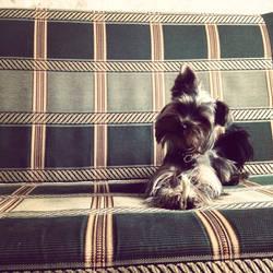 My new puppy by liola1122