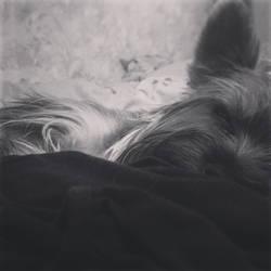 Puppy falling asleep by liola1122