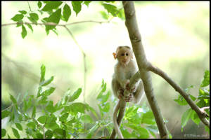 Baby monkey glow by mercyop