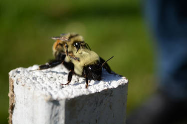 Bees and the bees