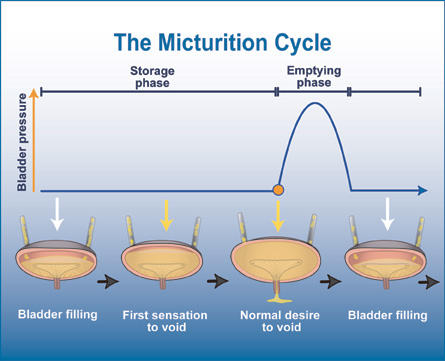 The Dreaded Micturition Cycle by raw-sienna on DeviantArt