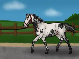 equiBREAK - Foal Inspection