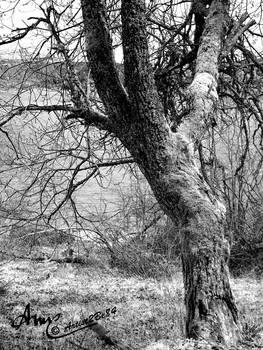Schluchsee Baum Schwarz-Weiss