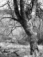 Schluchsee Baum Schwarz-Weiss by Artist2Be84