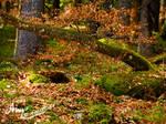 Schluchsee Baumformation Wald
