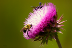 Pink and Bumble