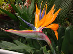 Bird of Paradise by othertalk