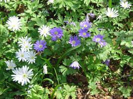 Fernwood Flower 17 by othertalk