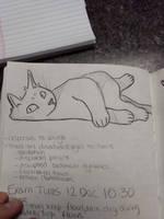 Kitty study