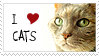 Love cats by KittyCatCult