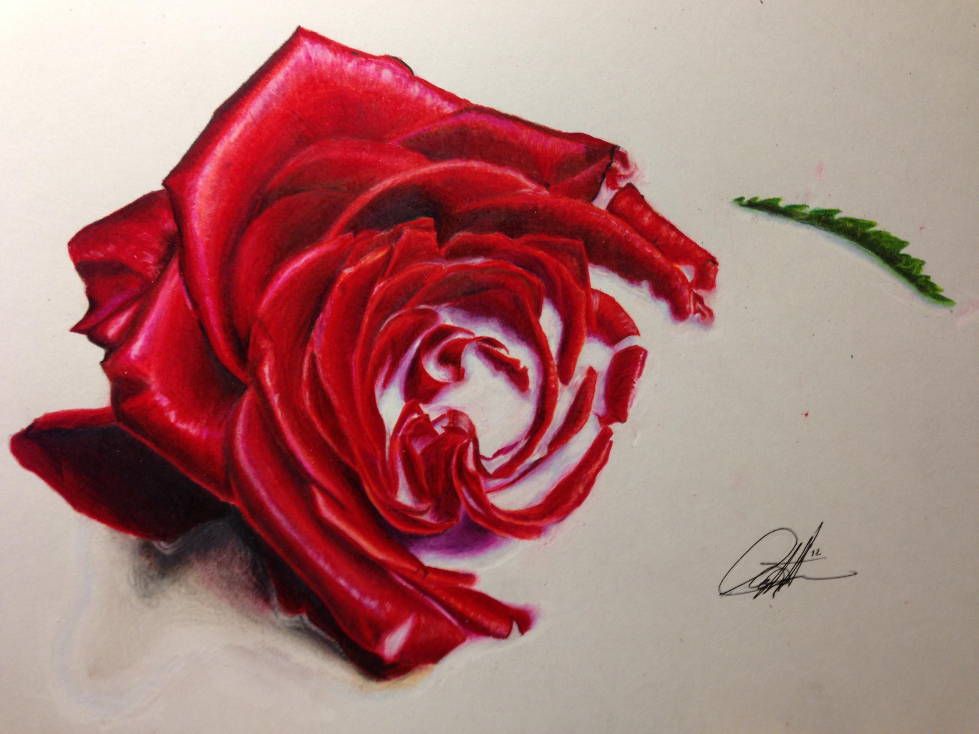 Roses are ff0000 by ChrisHerreraArt on DeviantArt