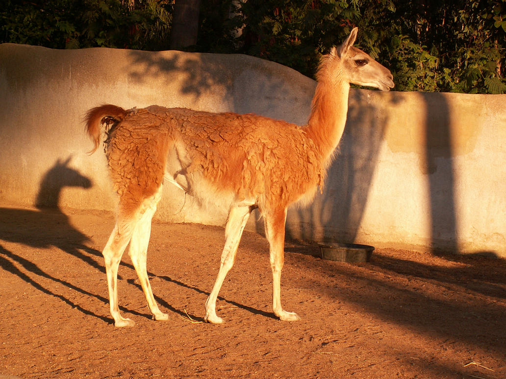 llama speed dating Search the world's information, including webpages, images, videos and more google has many special features to help you find exactly what you're looking for.