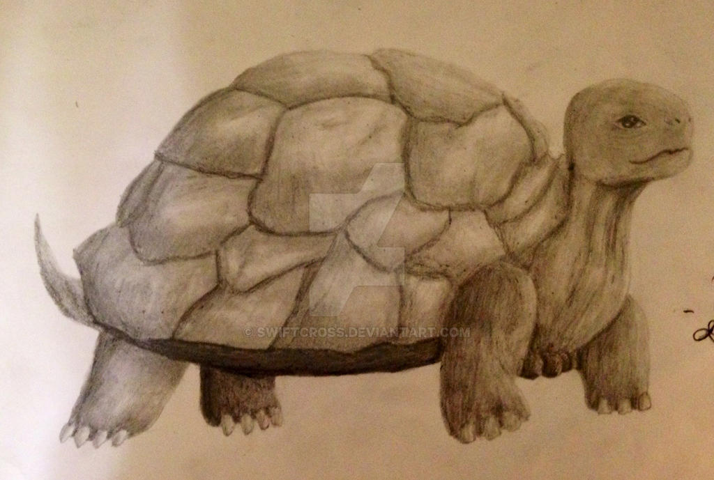 Turtle-finished by swiftcross