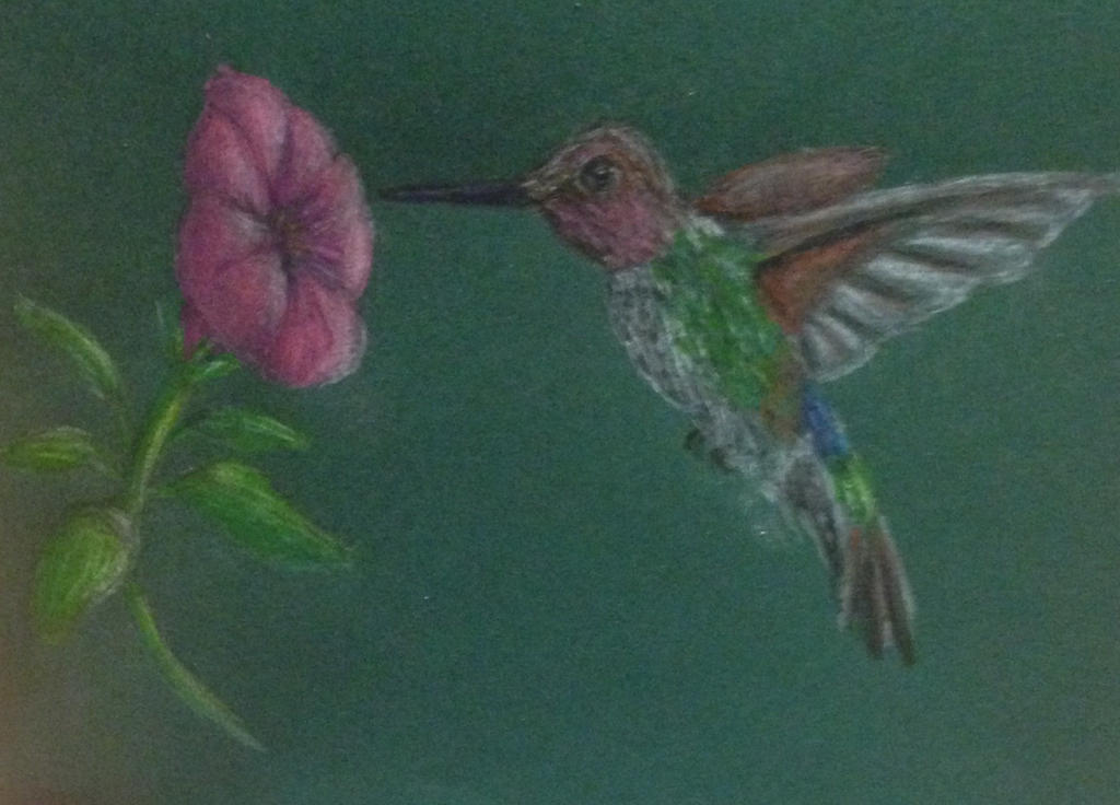 Hummingbird  by swiftcross