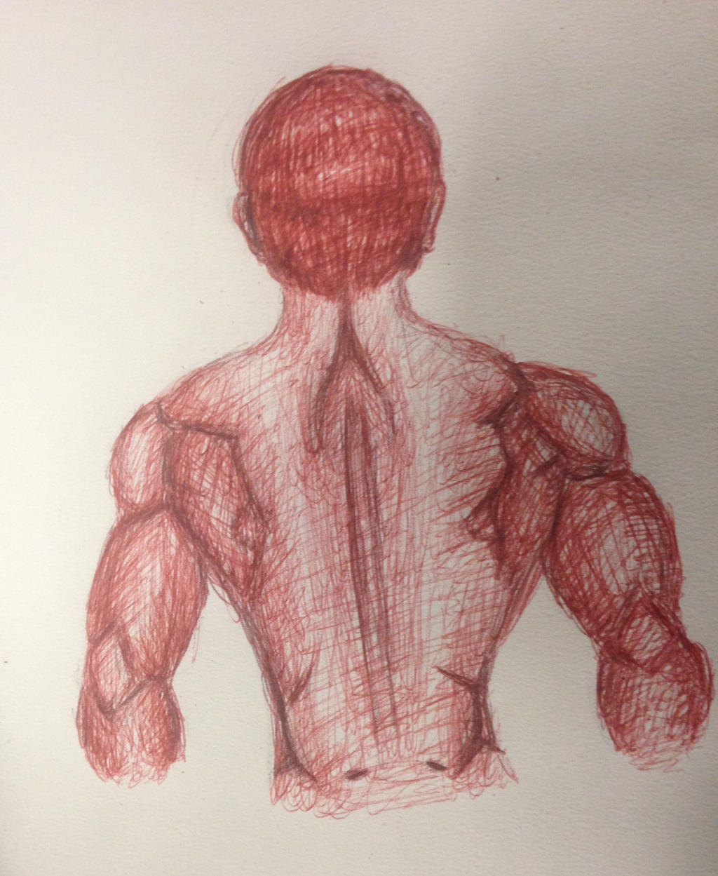 Back Muscles by swiftcross