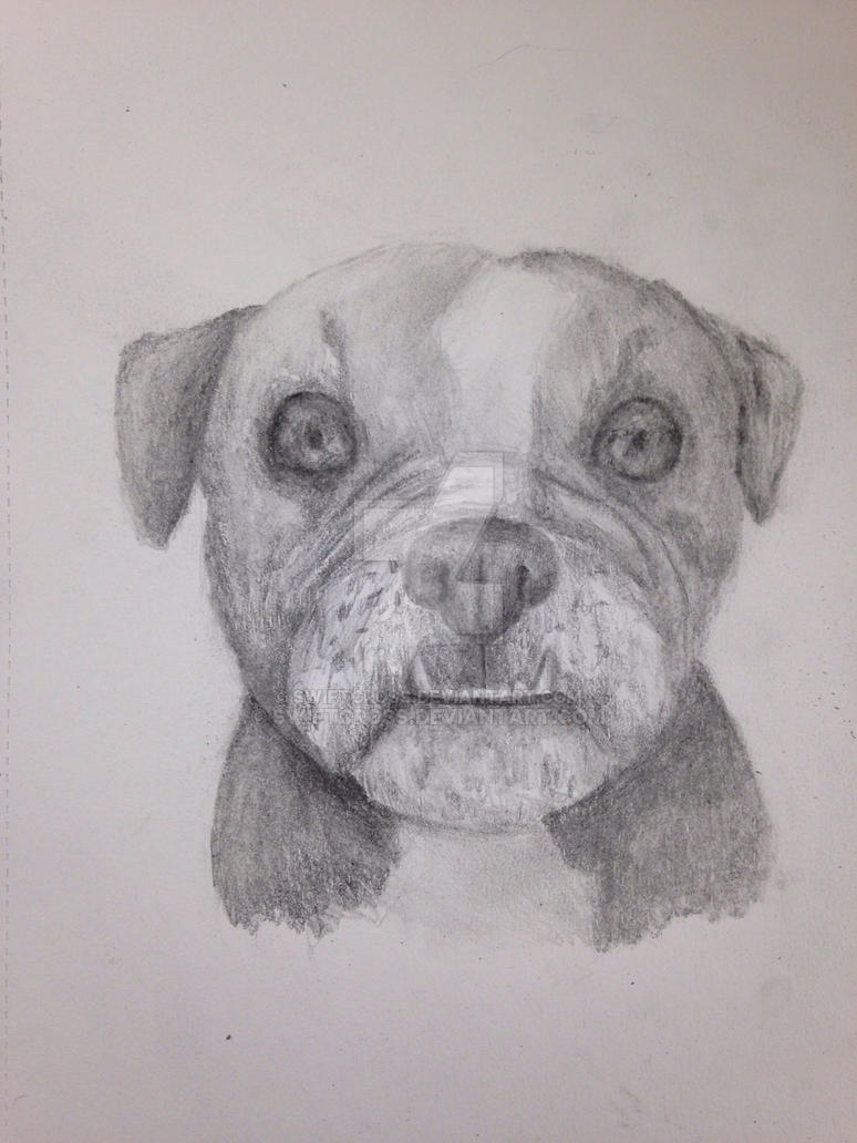 Bulldog by swiftcross