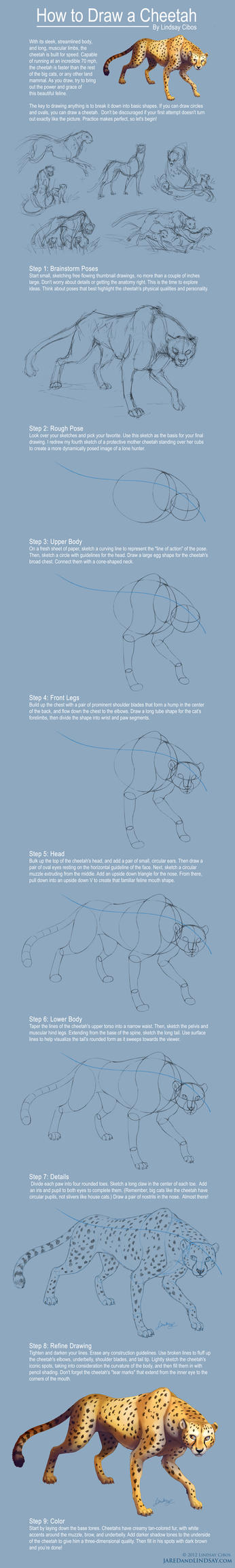 How To Draw A Cheetah by LCibos