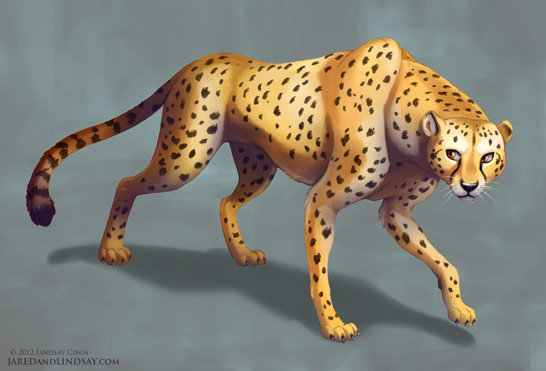 Cheetah by LCibos
