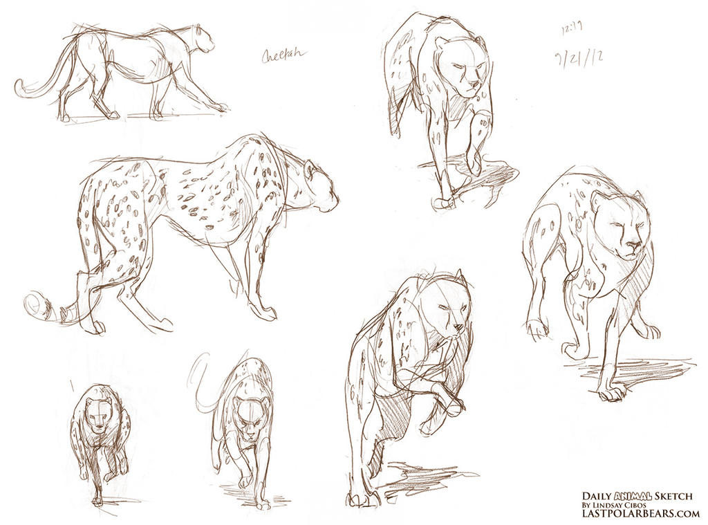 Run, Cheetah - from the sketchbook by LCibos