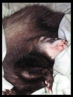Sleepy Momoko by LCibos