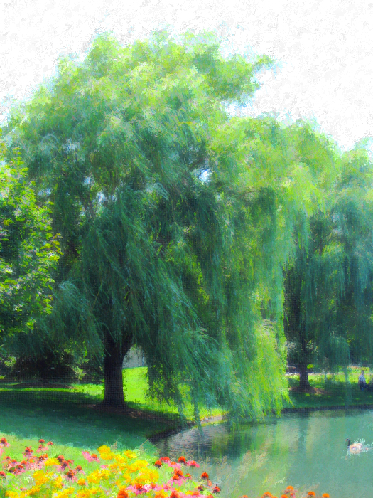 Willow Tree by bluestone78