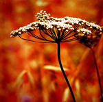 flower of fire by utopic-man