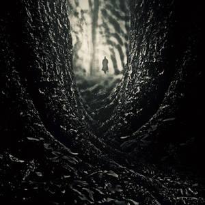 whisper of dark forest