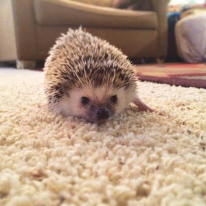 Very cute hedgehog