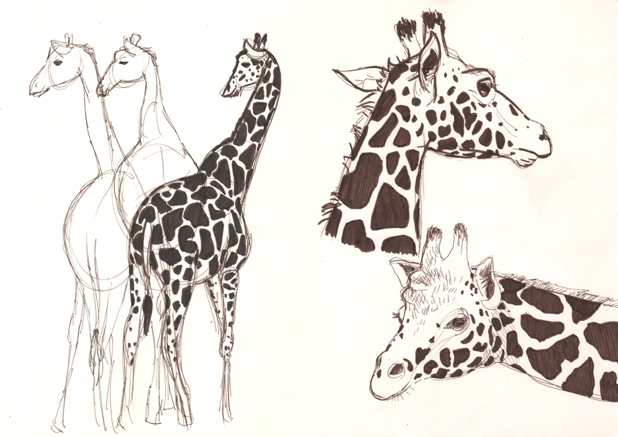 Giraffe Art Tumblr