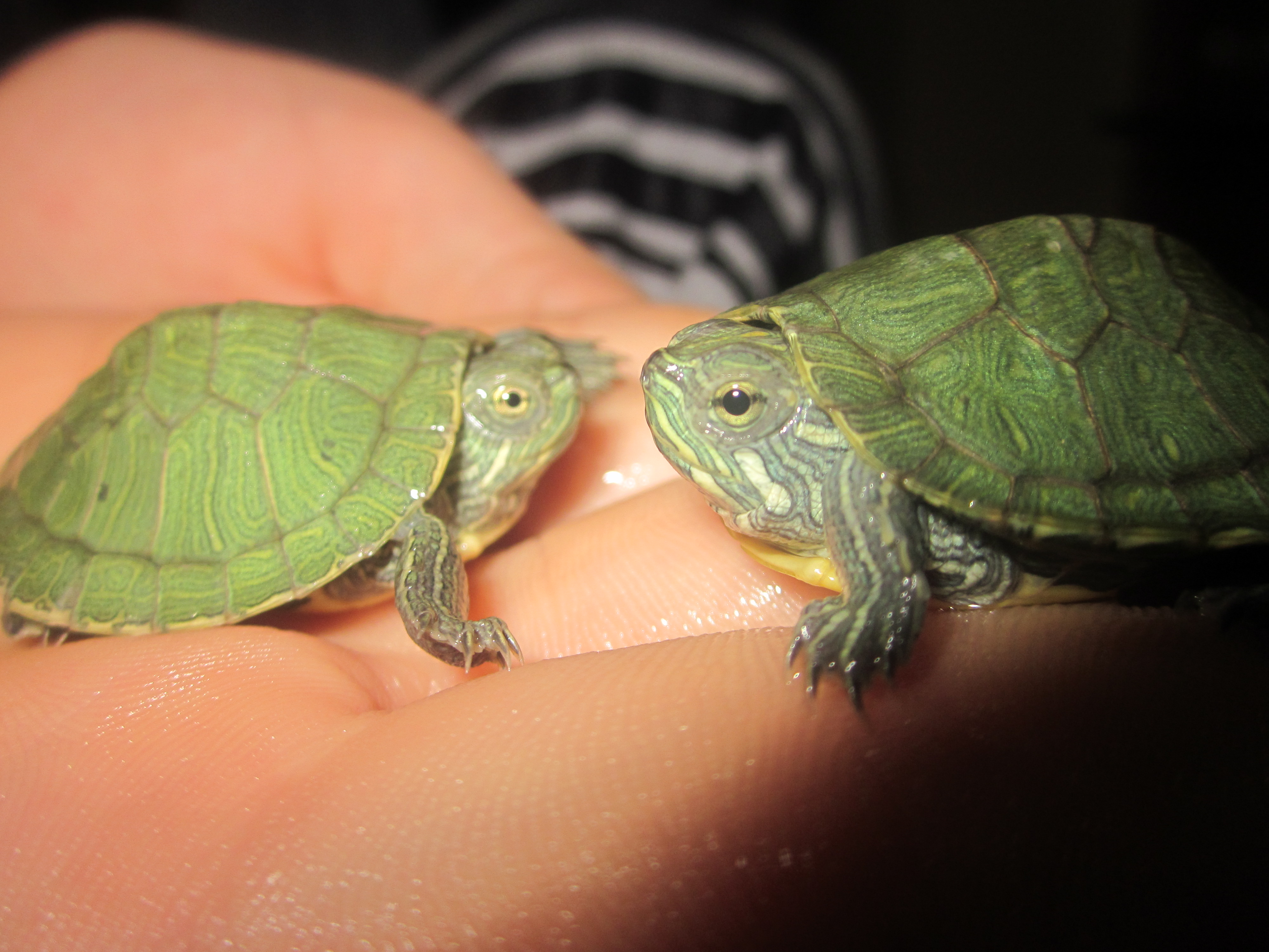 Two cute turtle by empearli on deviantart - Cute turtle pics ...