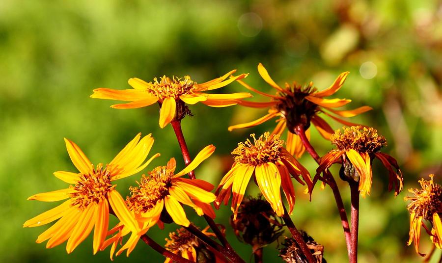 Gold autumn... by Freya7