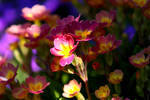 Spring flowers 2...