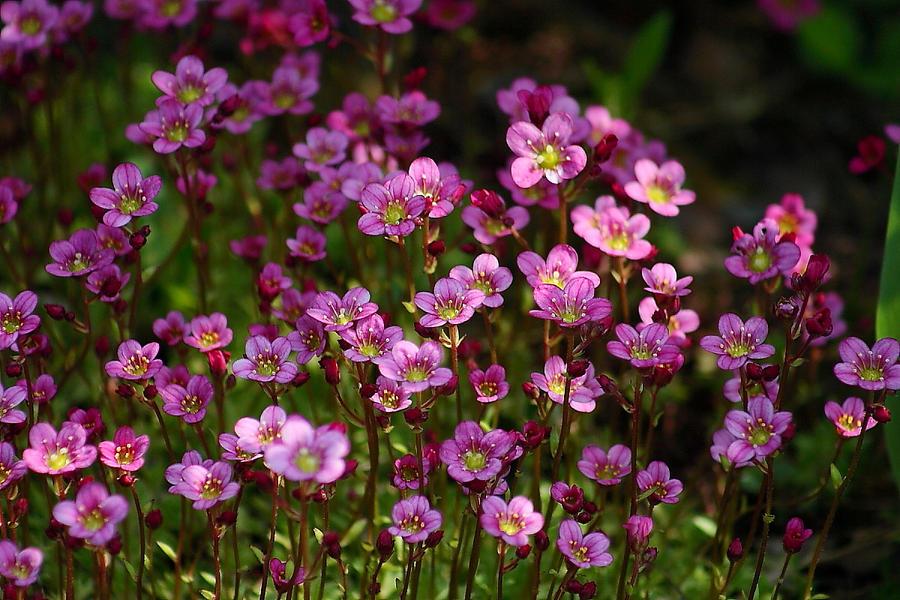 Spring flowers 3... by Freya7